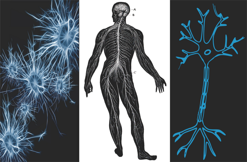 What is neuropathic pain or nerve pain? Also find out what neuropathic pain feels like & what is allodynia, hyperalgesia and paresthysia. In Part 1 of the Ultimate Guide To Understanding Chronic Pain you will also find out that neuropathic pain is caused by irritation, injury or dysfunction of the peripheral (PNS) or central nervous system (CNS).